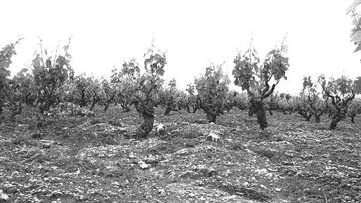 Terre di Campo Sasso