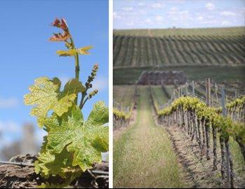 Cumulus Estate Wines